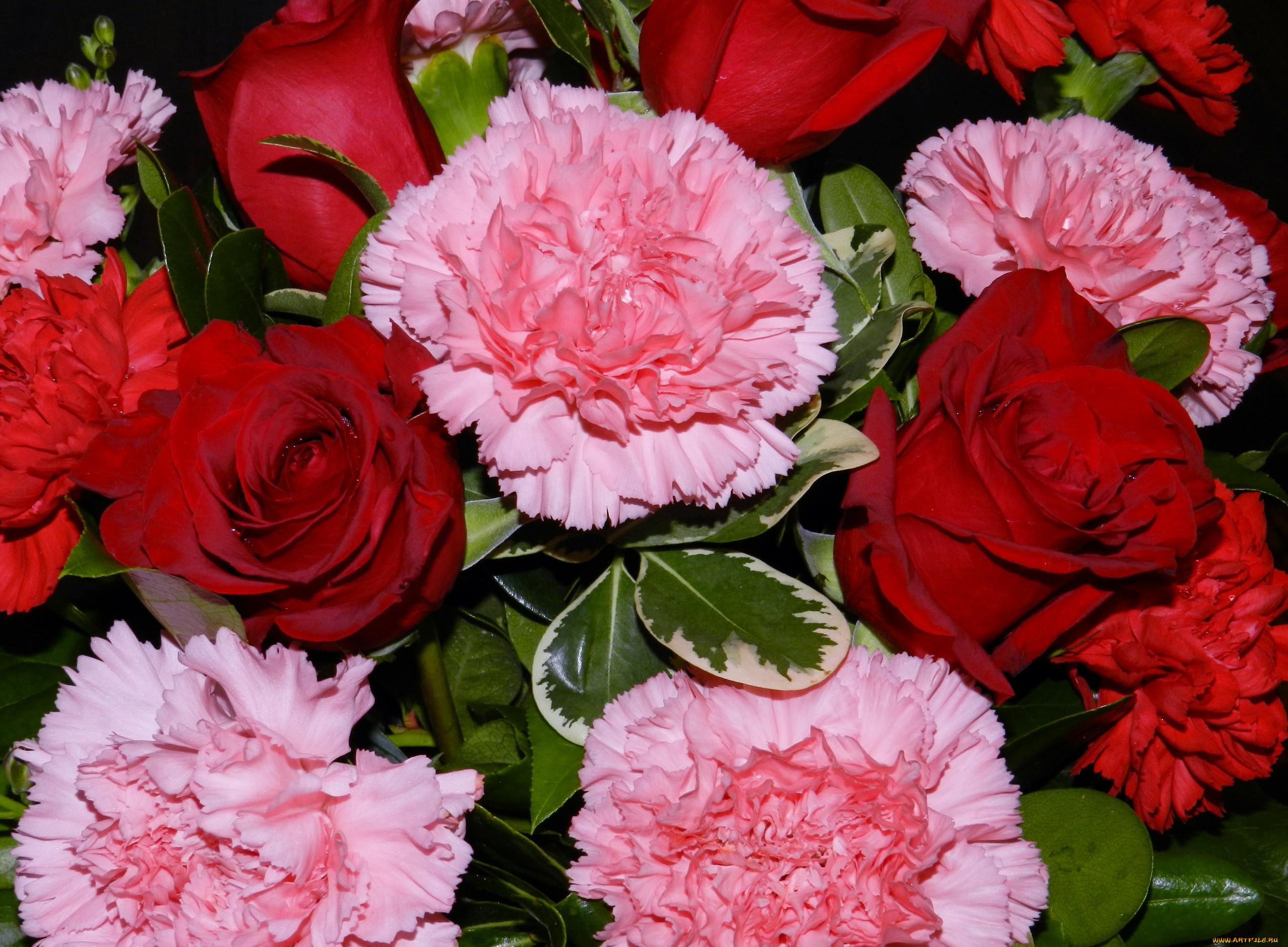 цветами картинки роз и гвоздик ставят